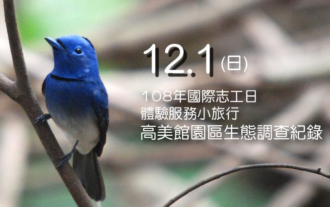12月1日(日) 108年國際志工日│體驗服務小旅行│高美館園區生態調查紀錄
